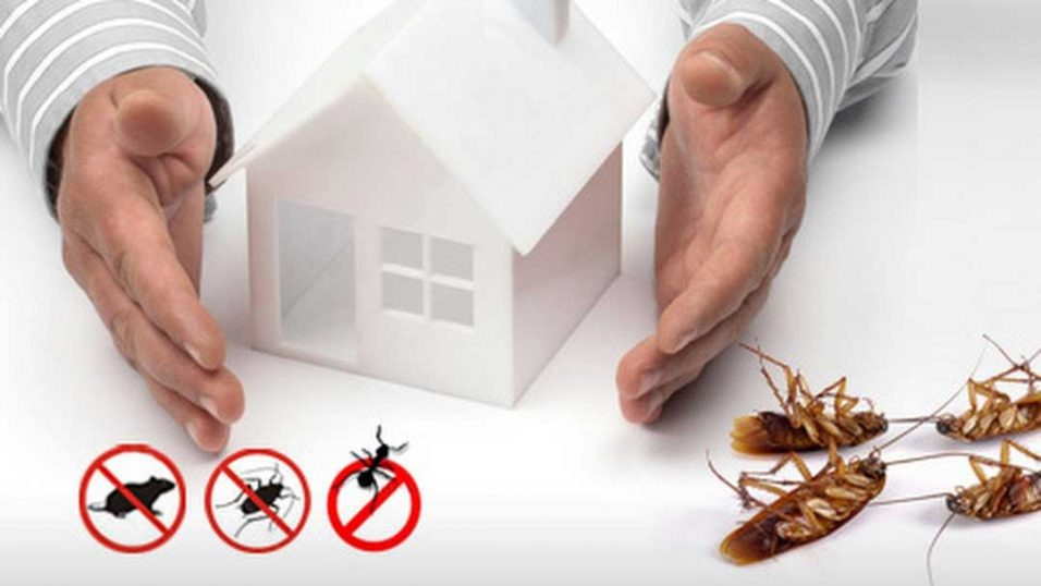Ways to Deal with Pests in Your Home